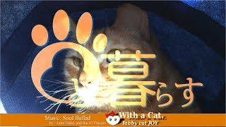 Download とら猫 JOY (ΦωΦ) - Soul Ballad. に Jazz な日 Video