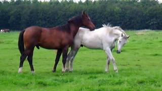 Download Horses in the field (Stabilized) Video