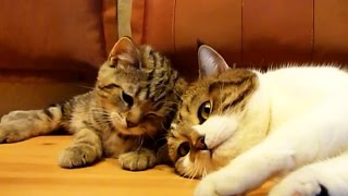 Download Don't sleep, bro ! Funny Cats video Video