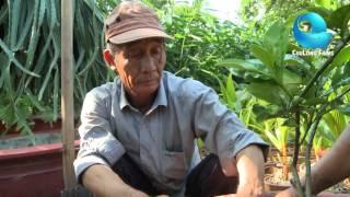 Download Mô hình Trồng ổi trong chậu của Kỹ sư Nguyễn Chí Cường Video
