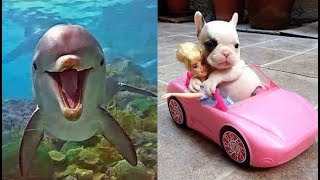Download Cute baby animals Videos Compilation cute moment of the animals - Soo Cute! #6 Video