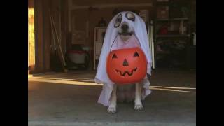 Download Trick or Treat - These Houses are the BEST! Video