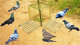 Download Primitive Technology: Simple DIY Bird Trap Make from Bamboo That Work 100% By Smart Boy Video