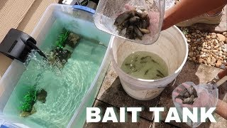 Download HOMEMADE Backyard BAIT WELL For POND! *First Live Feeding* Video