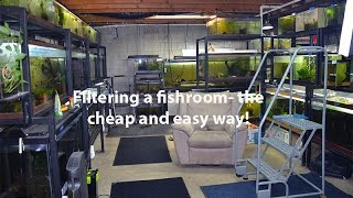 Download How I filter my fishroom the cheap and easy way! Video