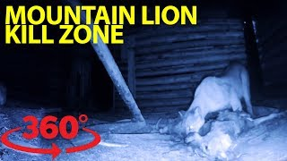 Download Incredible rare glimpse inside a mountain lion 'kill hut' at night in VR Video