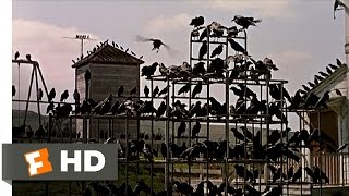 Download Crows on the Playground - The Birds (5/11) Movie CLIP (1963) HD Video