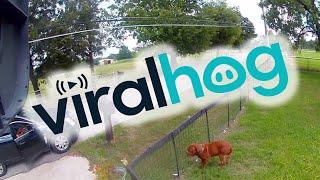 Download Security Camera Captures Horrible Puppy Theft    ViralHog Video