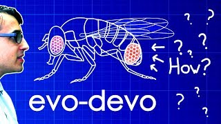 Download Evo-Devo (Despacito Biology Parody) | A Capella Science Video