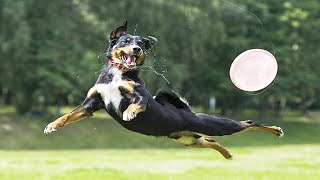 Download Playful Pets 😍🐕 Funny Dogs Jumping (Full) [Funny Pets] Video