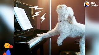 Download Singing Dog Loves to Play Piano + Other Dogs Who Found Their Passion In Life | The Dodo Video