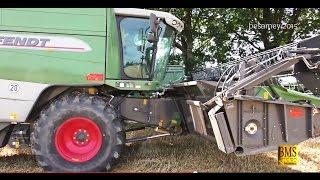 Download FENDT Mähdrescher 6300 C - Weizenernte - Getreide mähen/dreschen im Landkreis Uelzen Video
