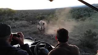 Download Rhino charge in Addo Elephant National Park Video