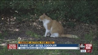 Download Rabid cat attacks 2-year-old child in Hillsborough County Video