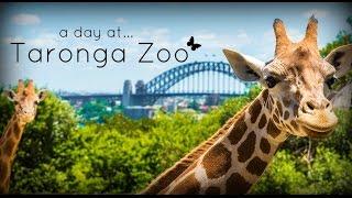 Download Taronga Zoo, Sydney Australia - 2017 Video