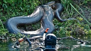 Download Diver Discovers Giant Anaconda Video