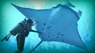 Download Manta ray, a giant of the ocean Video