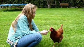 Download The Very Best of Pets! (Chickens of course!) Video