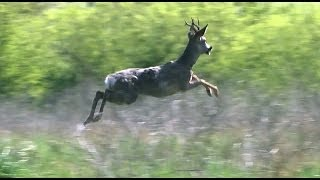 Download Our Most Amazing Deer Rescue Ever - Full Length Video