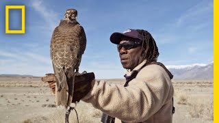 Download Hunting With Falcons: How One City Man Found His Calling in the Wild | Short Film Showcase Video