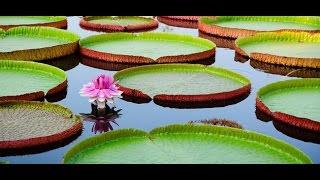 Download Chùa Lá Sen (Phước Kiển Tự) - Hòa Tân, Châu Thành, Đồng Tháp, Việt Nam (Lotus Pagoda) Full HD 1080p Video