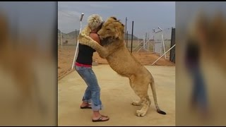 Download LION AND WOMAN HUG EACH OTHER IN AN INCREDIBLE DISPLAY OF LOVE AND AFFECTION Video