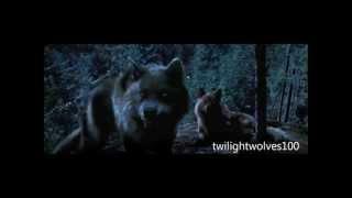 Download NEW wolf scenes | Twilight 2-4.1 scenes HD.wmv Video