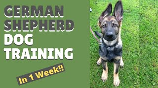 Download German Shepherd Dog Training and Mastering the Art of Attention in Only 1 Week Video