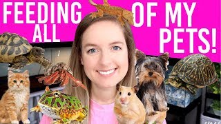 Download FEEDING ALL MY PETS | Daily Routine For 12+ Animals Video