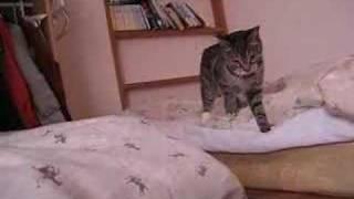 Download 超高速猫パンチ! Video