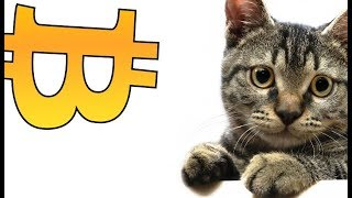 Download CryptoKitties – People Are Buying and Selling Digital Cats for Tens of Thousands of Dollars Video
