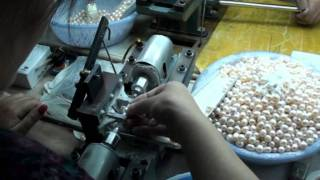 Download Freshwater Culture Pearls production Video