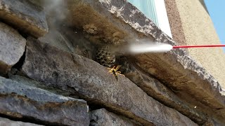 Download HOW NOT TO GET RID OF WASPS!! (FREEZING, BUG-A-SALT, and ELECTROCUTION!!!) Video