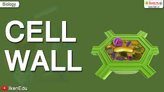Download Cell Wall Video