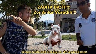 Download Pitbull Tyson'la Denize Gittik Zabıta Bastı! - Denize Giremezsiniz Dedi!!! Video