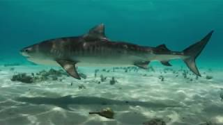 Download Remember - Blue Planet II Trailer Video