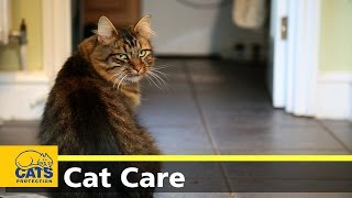 Download Caring for your cat - keeping indoor cats happy Video