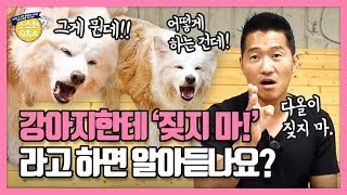 Download [Eng sub] 강아지한테 '짖지 마!' 하면 알아듣나요?|강형욱의 소소한 Q&A Video