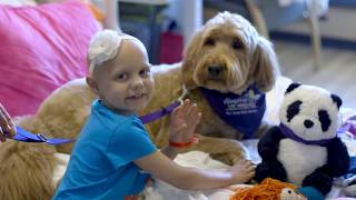Download CHLA Dog Therapy Program 2017 Video