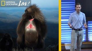 Download The Fascinating Lives of Bleeding Heart Monkeys (Part 1) | Nat Geo Live Video