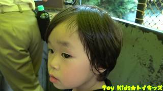 Download おでかけ 東京ディズニーランドに行ったよpart3❤テーマパーク Toy Kids トイキッズ レオくん 子供動画 Video