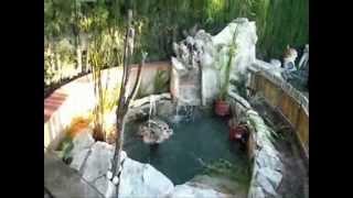 Como Hacer Un Estanque Para Tortugas Casero Free Download Video - Como-construir-un-estanque-para-tortugas