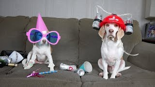 Download What Dogs Really do when Home Alone: Funny Dogs Maymo & Penny Video