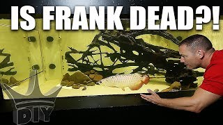 Download WHAT HAPPENED TO FRANK!?! My pet aquarium fish Video