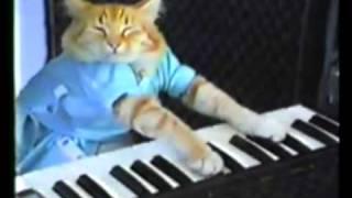 Download Kanye Interrupts Keyboard Cat! *Original* Video