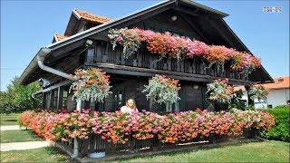 Download House & Garden - Flower Around The Houses Ideas Video