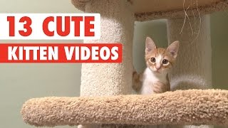Download 13 Cute Kittens Video Compilation 2016 Video