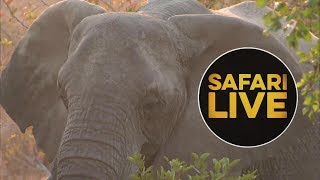 Download safariLIVE - Sunset Safari - June 27, 2018 Video