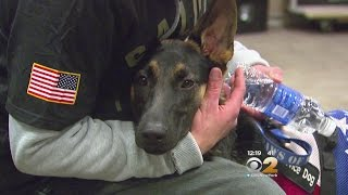 Download Veteran Surprised With Service Dog At Giants Game Video