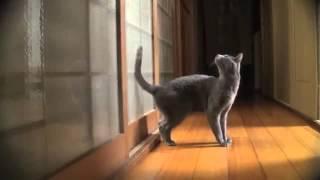 Download Meilleur des chats 2013 Video